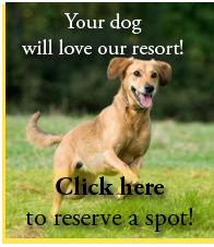 Your dog will love wiggles and wags pet resort
